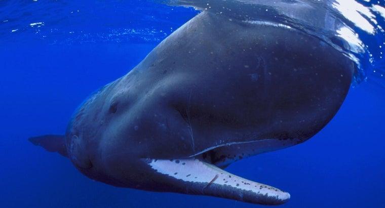 sperm-whales-eat