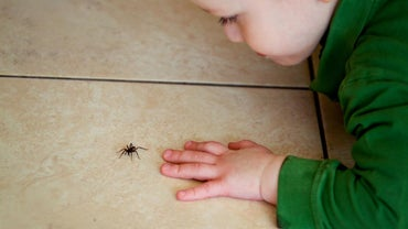 What Is the Best Spider Killer Spray?