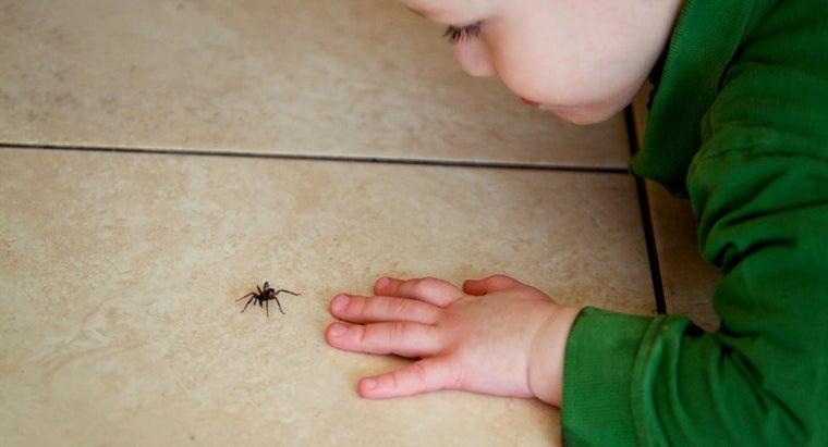 spider-killer-spray