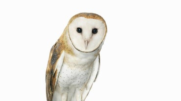 What Is the Spiritual Meaning of a White Owl?