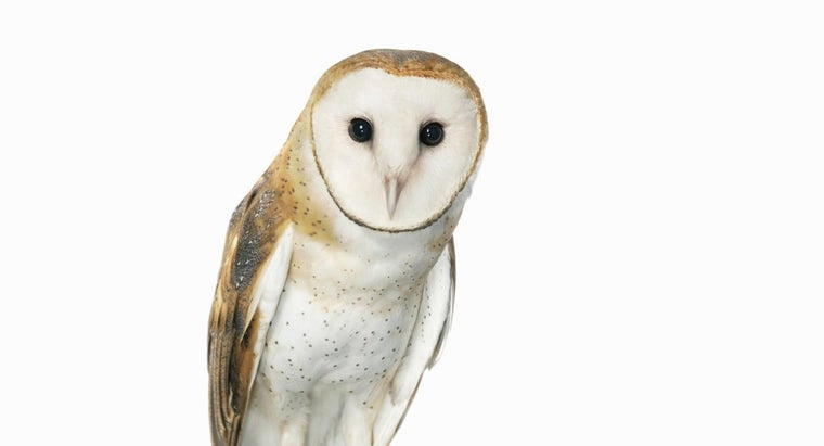 What Is the Spiritual Meaning of a White Owl? | Reference com