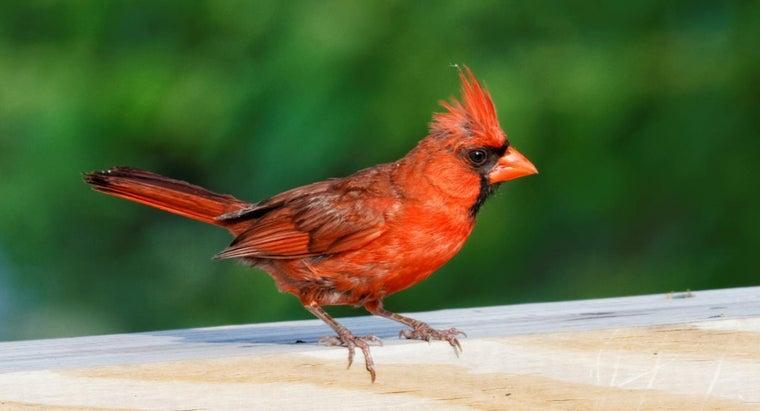 spiritual-meaning-red-cardinal-bird