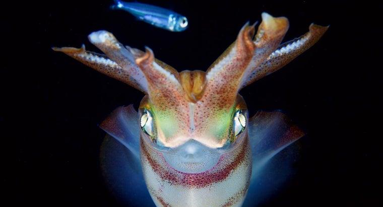 squids-eat