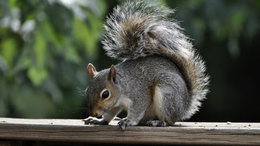 Where Do Squirrels Live?