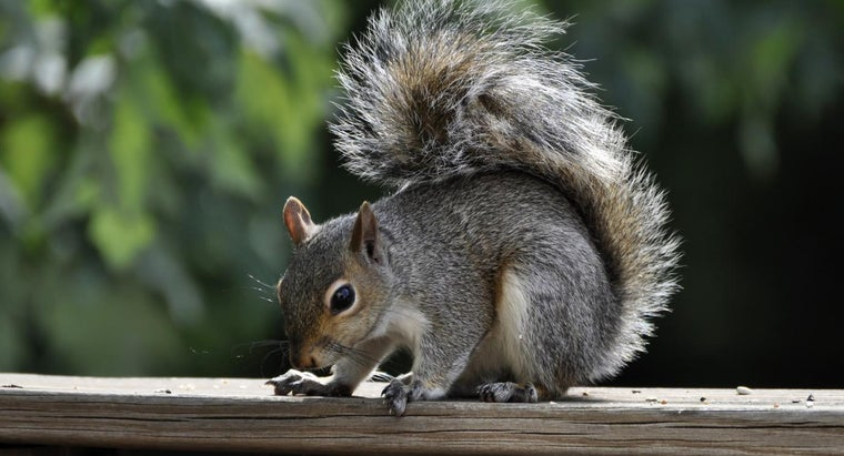 squirrels-live