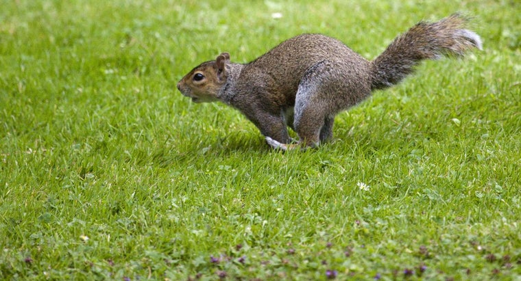 squirrels-protect-themselves