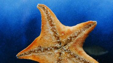 Do Starfish Have Bones?