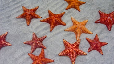 How Do Starfish Breathe?