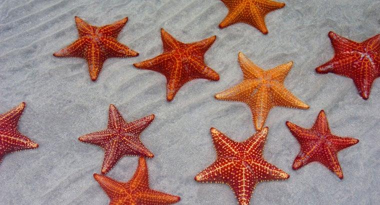 starfish-breathe