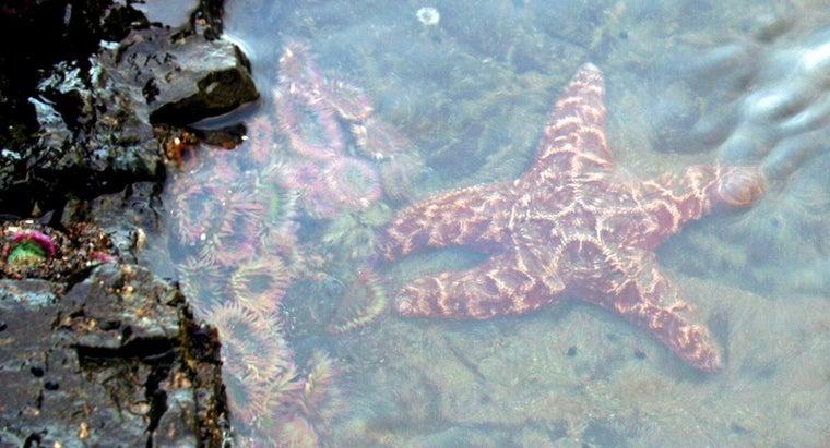 starfish-found