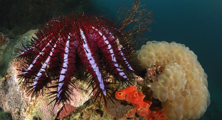 starfish-poisonous