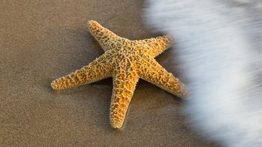 How Do Starfish Reproduce?