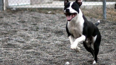 What States Have Banned Pit Bulls?