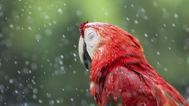 Where Do Birds Go When It Rains?