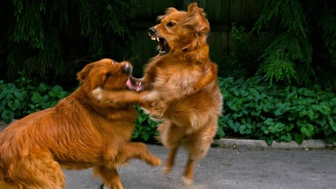 How Do You Stop a Dog Fight?