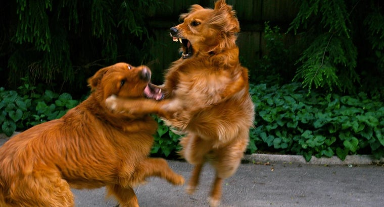 stop-dog-fight