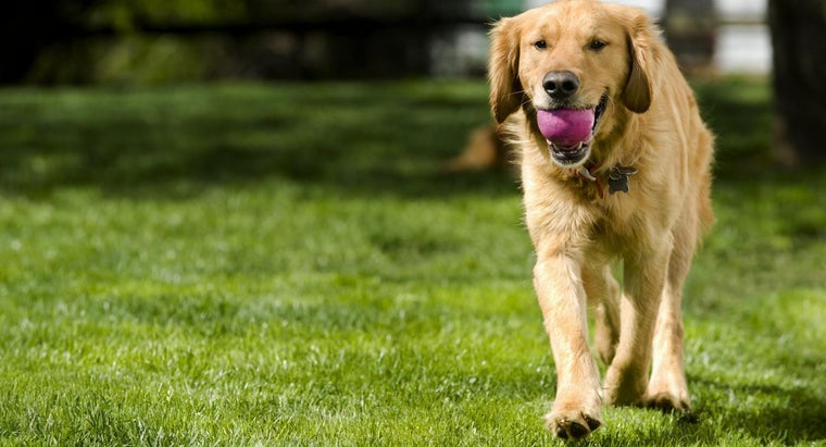 stop-dogs-fouling-garden