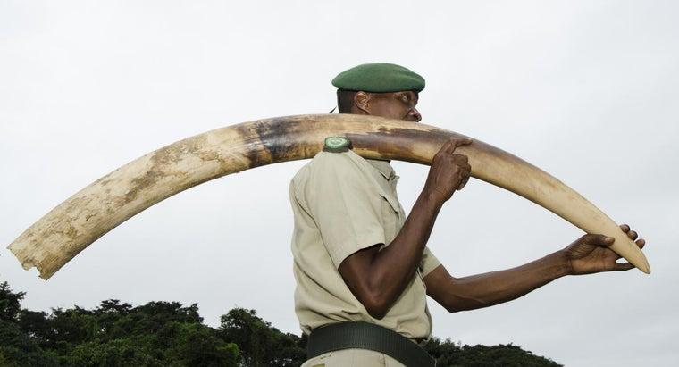 stop-illegal-poaching