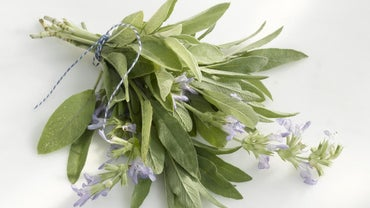 What Are Some Stores That Sell Sage?