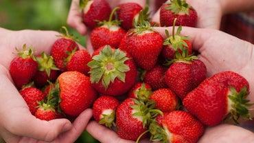 When Is Strawberry Picking Season?