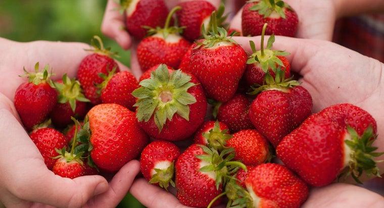 strawberry-picking-season