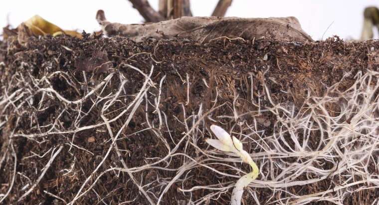 structure-root-hair-cell
