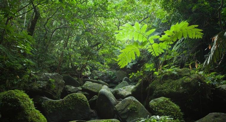structure-tropical-rainforest