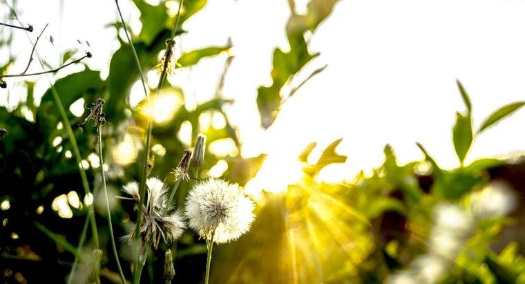 sunlight-needed-photosynthesis