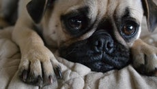 What Are You Supposed to Do When Your Dog's Nail Is Falling Off?