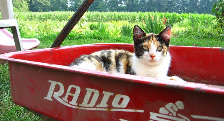 sweet-names-female-calico-kitten