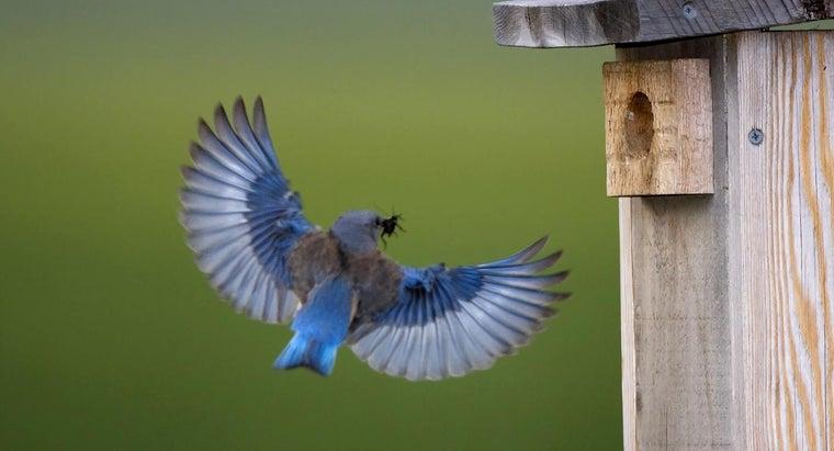 symbolic-meaning-bluebird