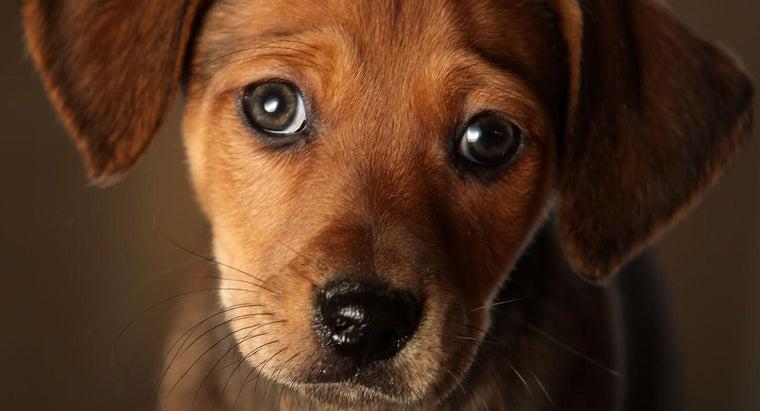 symptoms-congestive-heart-failure-dogs