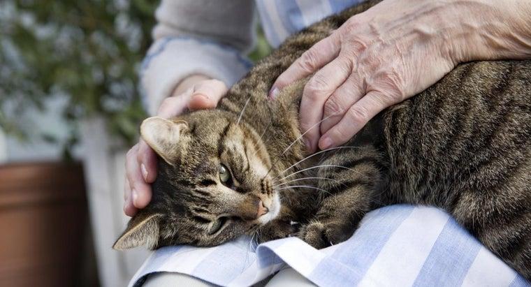 symptoms-dying-cat