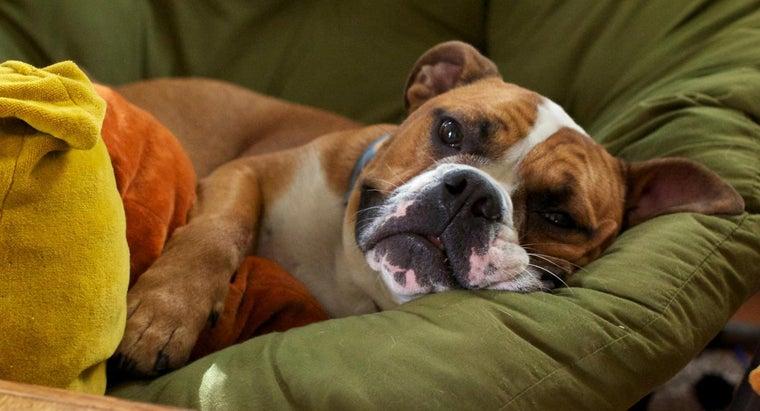 symptoms-mini-strokes-dogs