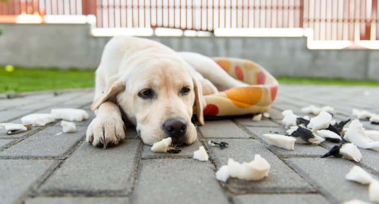 symptoms-poisoning-dogs