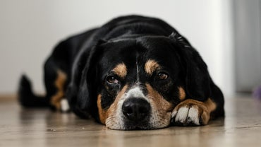 What Are the Symptoms of Worms in Dogs?