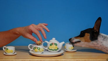 Is Tea Poisonous to Dogs?