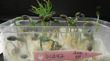 How Does Temperature Affect Seed Germination?