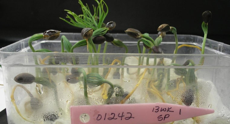temperature-affect-seed-germination