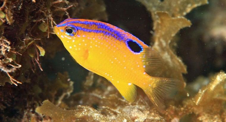 temperature-should-tropical-fish-tank