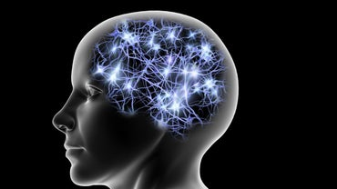 What Does the Temporal Lobe Control?