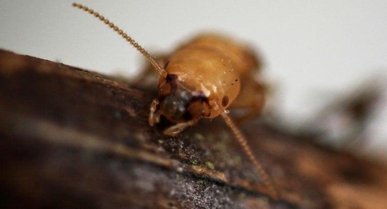termite-bites-look-like