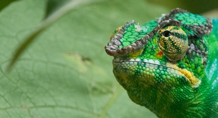 terrestrial-biome-greatest-diversity-life