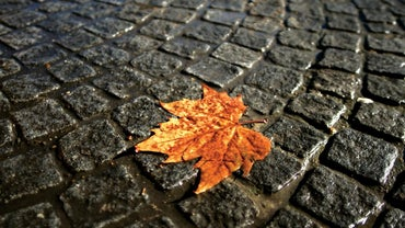 "What Is the Theme of ""The Last Leaf"" by O. Henry?"