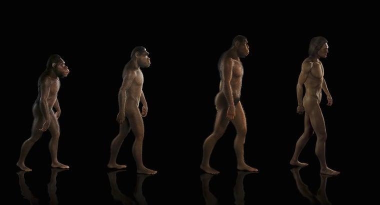 theory-evolution
