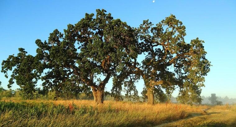 things-trees