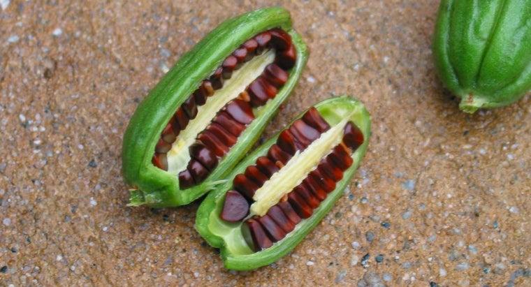 three-parts-seed