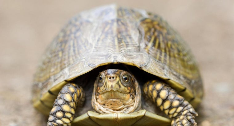 three-toed-box-turtle
