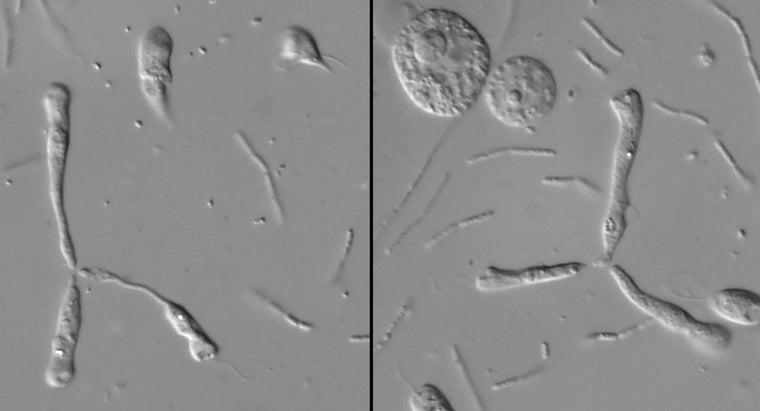 three-ways-protists-move
