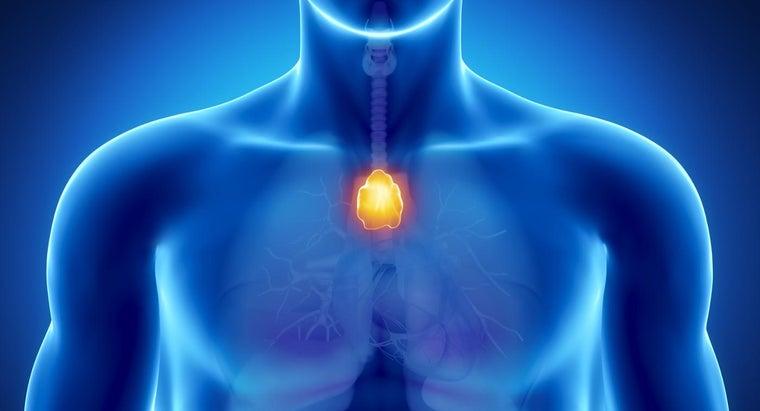 thymus-gland-shrink